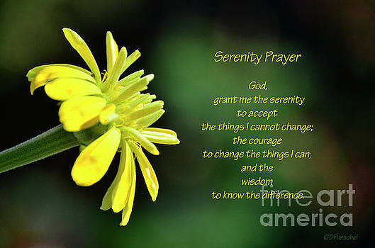 Zinnia Serenity Prayer by Debby Pueschel
