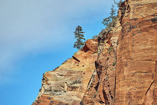Zion National Park by Steve Kaye