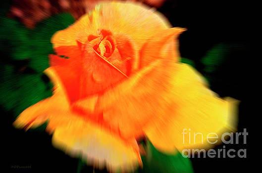 Zoom Blur Rose by Debby Pueschel