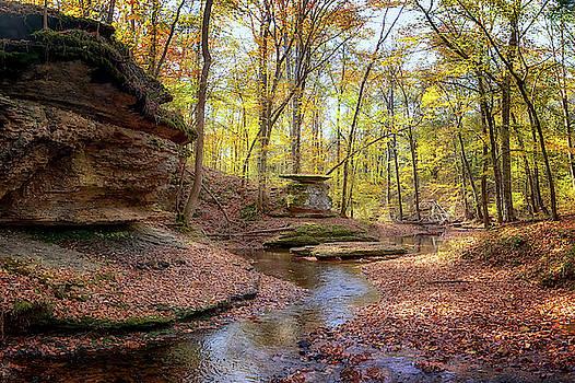 Susan Rissi Tregoning - Autumn at Glenrock Branch