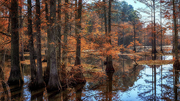 Susan Rissi Tregoning - Autumn in the Cypress Cove