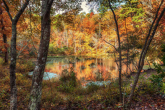 Susan Rissi Tregoning - Autumn Reflections