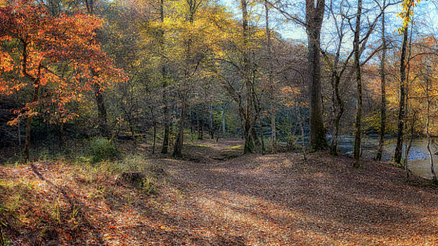 Susan Rissi Tregoning - Autumn Trails