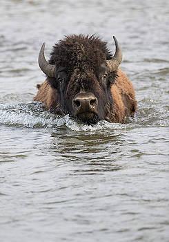 Max Waugh - Bison Fording River