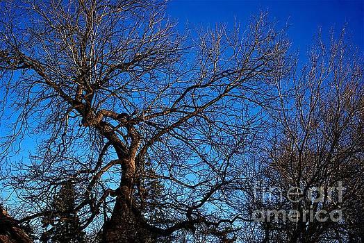Frank J Casella - Branch Formations Morning Blue Sky