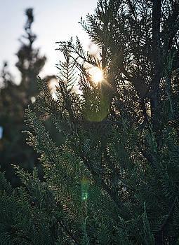 Andrea Anderegg - Christmas Tree 2