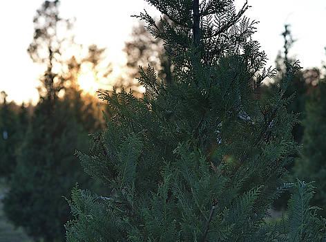 Andrea Anderegg - Christmas Tree 3