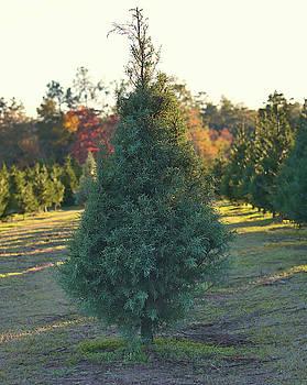 Andrea Anderegg - Christmas Tree 4