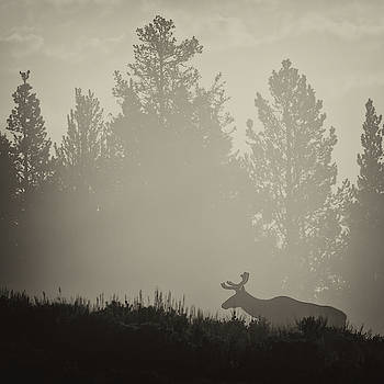 Max Waugh - Elk in Fog