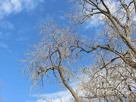 John LaCroix - Fall Tree