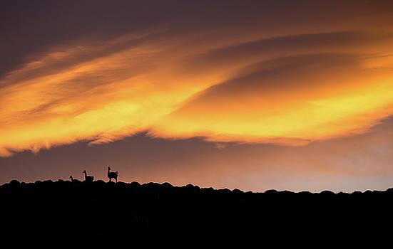 Max Waugh - Fiery Guanaco Sunrise