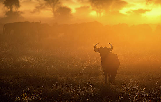 Max Waugh - Fiery Ndutu Morning
