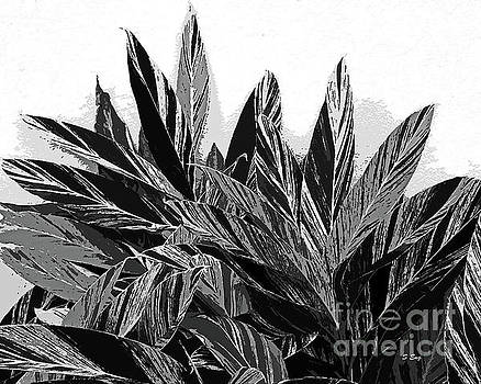 Sharon Williams Eng - Ginger Variegation Abstract Black and White 300