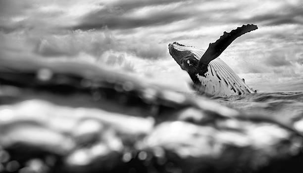 Max Waugh - Humpback Breach from Below