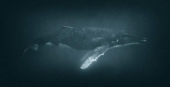 Max Waugh - Humpback Whale Profile