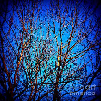 Frank J Casella - Illuminated Branches - Square