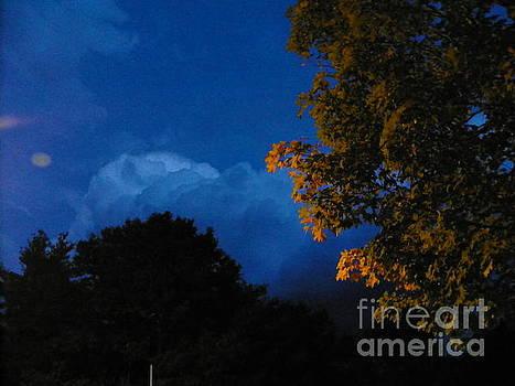 John LaCroix - Illuminated Night tree