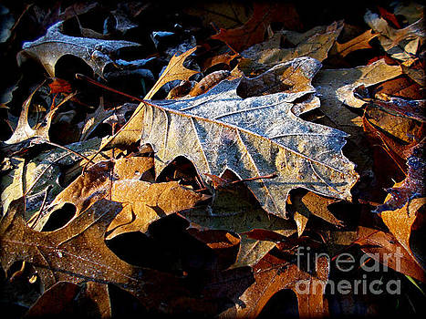 Frank J Casella - Morning Frost Autumn Leaves
