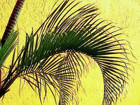 Sharon Williams Eng - Palm Frond Curvature 300