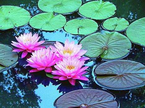 Sharon Williams Eng - Pink Waterlilies Horizontal 300