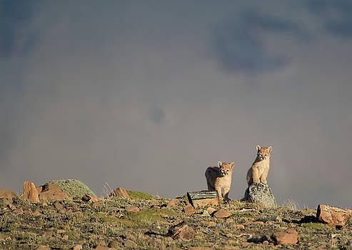Max Waugh - Puma Cubs
