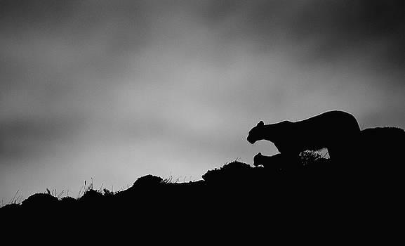 Max Waugh - Puma Family Silhouette