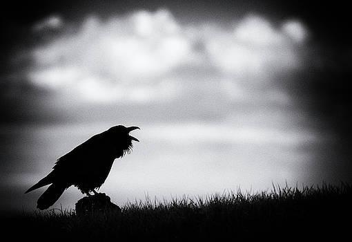 Max Waugh - Raven Mood