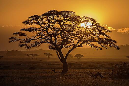 Max Waugh - Serengeti Sunset
