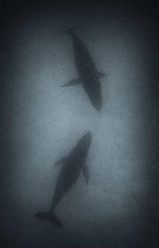 Max Waugh - Sleeping Humpback Whales