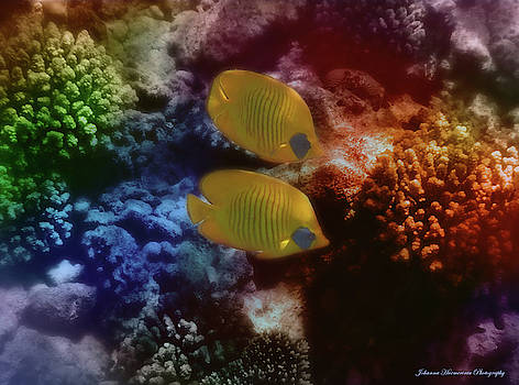 Johanna Hurmerinta - The Red Sea Masked Butterflyfish Couple Colorfully