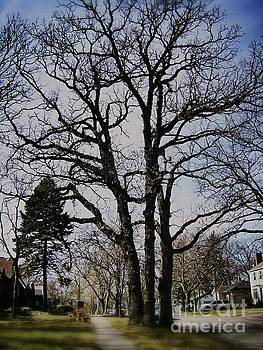 Frank J Casella - Tree Branches Stretch Into the Sky