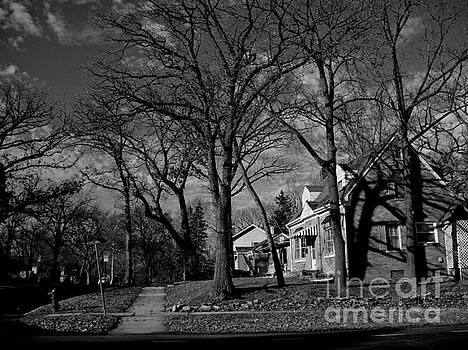 Frank J Casella - Tree Patterns Shadows and Houses