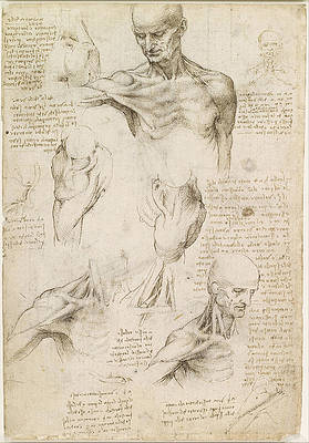 Superficial anatomy of the shoulder and neck Print by Leonardo da Vinci