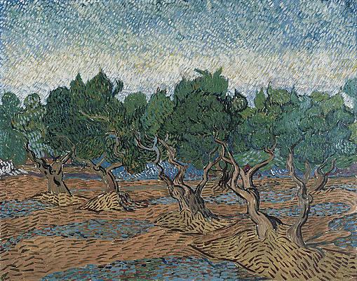 Olive grove Print by Vincent van Gogh