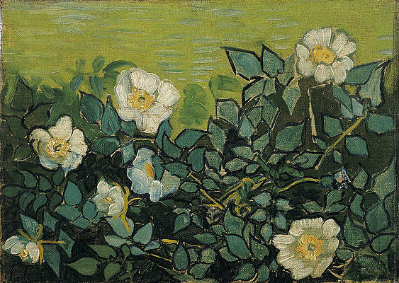 Wild Roses Print by Vincent van Gogh