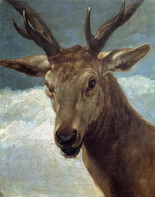 Head of a Stag Print by Diego Velazquez