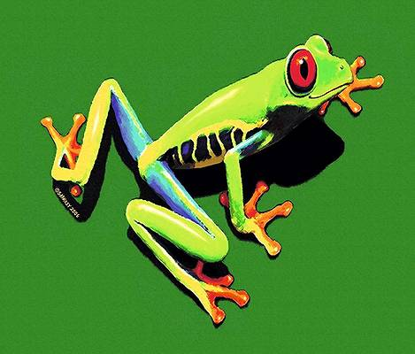 Red Eyed Tree Frog Canvas Print 20*30 Inch HUGE !