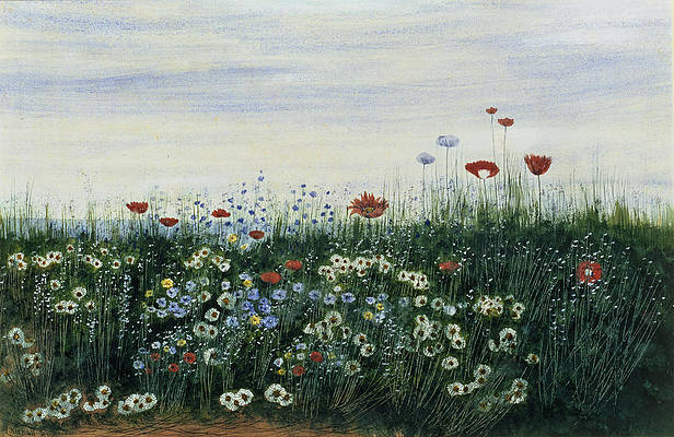 Wild Flower Drawing - Poppies, Daisies And Other Flowers by Andrew Nicholl