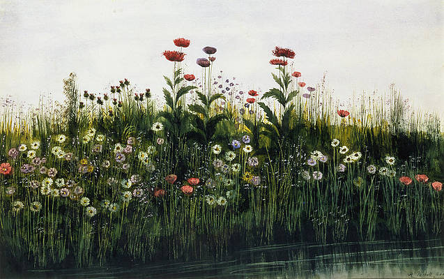 Wild Flower Drawing - Poppies, Daisies And Thistles by Andrew Nicholl