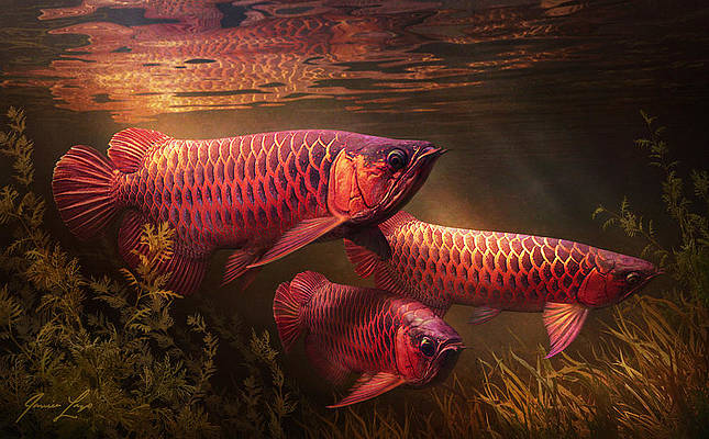 Asian Arowana Art Fine Art America