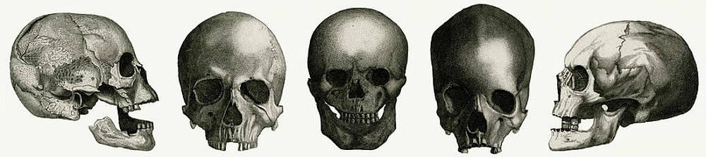 The Skulls Drawings Fine Art America