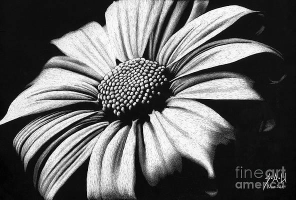Realistic Flower Drawing - Spring has Sprung by Sheryl Unwin