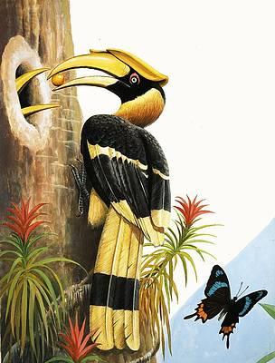 Wild Flower Drawing - The Hornbill by RB Davis