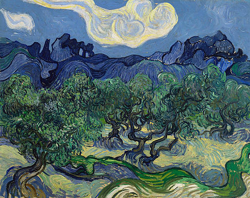 The Olive Trees Print by Vincent van Gogh