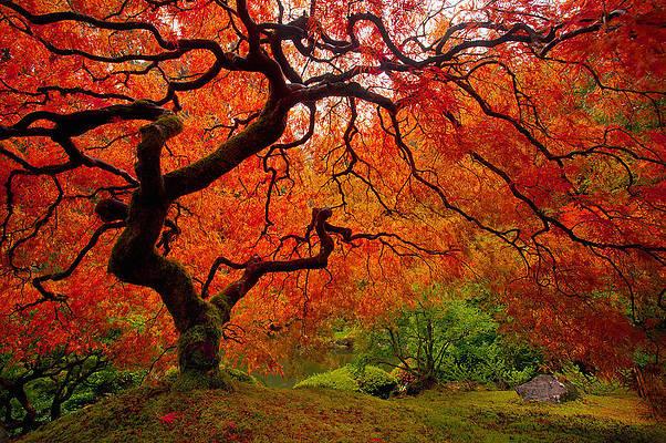 fall artwork nature photography fall trees Cazenovia fall wall decor fall foliage fall trees art fall wall art autumn leaves