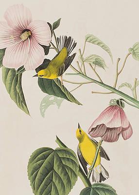 Рисунок дикого цветка - голубокрылая желтая пеночка Джона Джеймса Одюбона