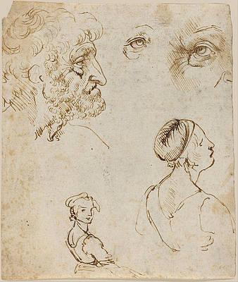Sheet of Studies Print by Leonardo Da Vinci