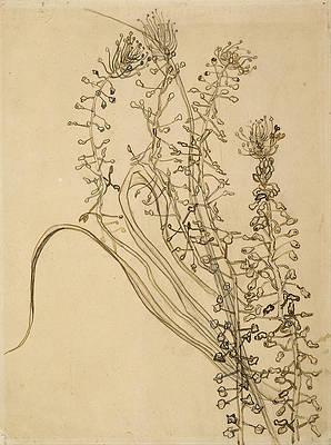 Tassel hyancinth Print by Vincent van Gogh