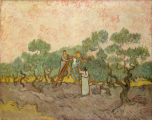 Women Picking Olives Print by Vincent van Gogh