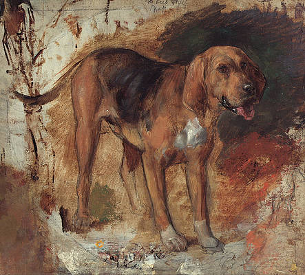 Study of a bloodhound Print by William Holman Hunt